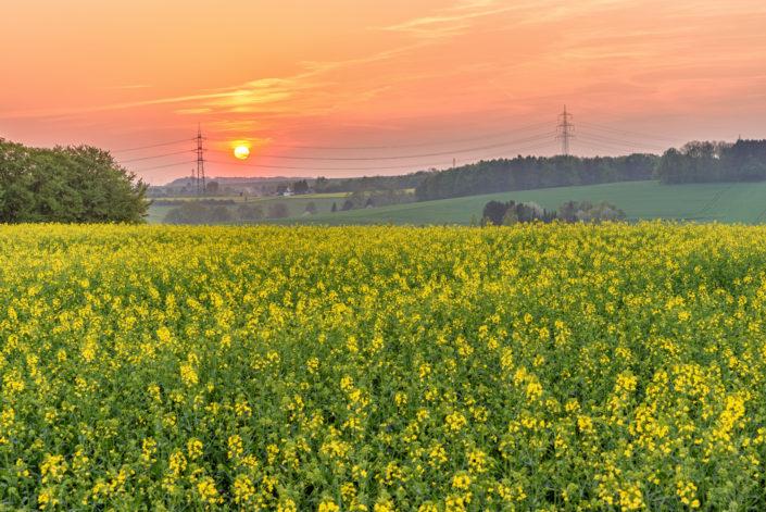 Sonnenuntergang Rapsfeld