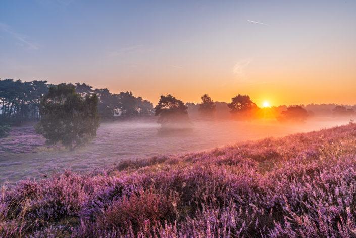 Westruper Heide Nebel Sonnenaufgang
